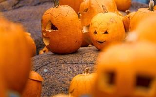 Les activités d'automne