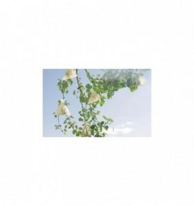 Fruitsac 17cmx22cm (50)