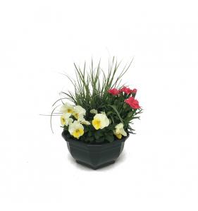 Composition 4 plants