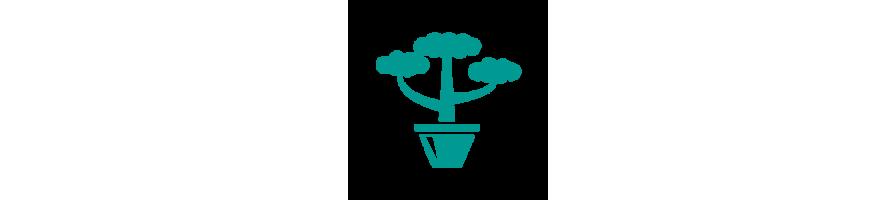 Nos produits : Accessoires pour plantes en pots