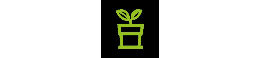 Nos produits : Plantes