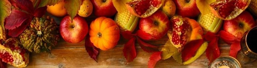 Les activités d'automne Lysadis