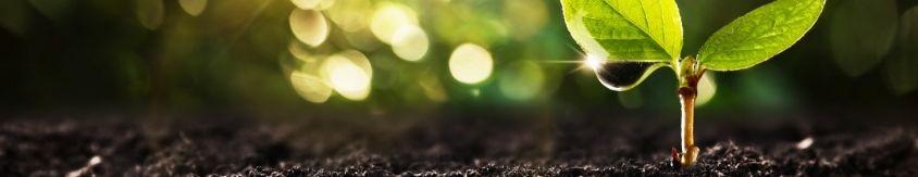 Poterie Jamet : système d'irrigation écologique Lysadis