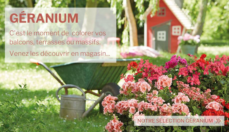 Tous nos produits pour avoir une belle floraison de géraniums.