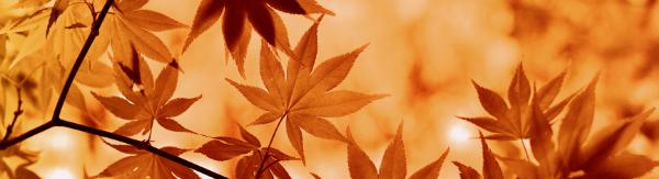 Articles d'automne