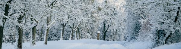 Articles d'hiver