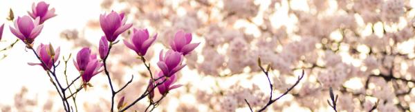 Articles de printemps