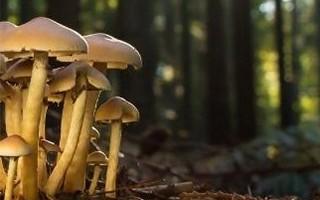 Tout savoir sur les champignons  Lysadis