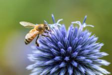 Vos premiers pas en apiculture Lysadis
